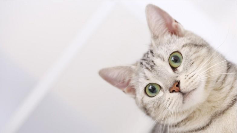 大学生创业猫咖可以吗?